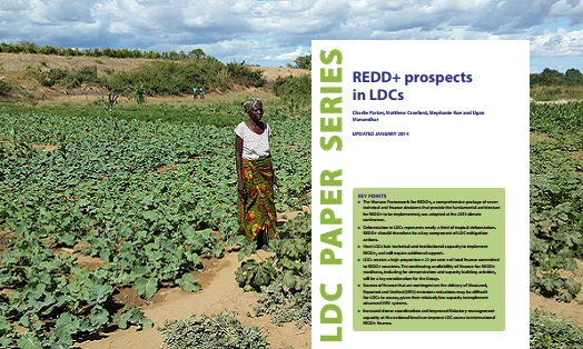 REDD+ prospects in LDCs