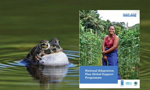 National Adaptation Plan Global Support Programme (NAP-GSP)